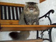 Ch Sup Moon Cat Jack