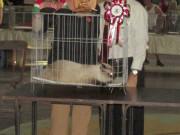 Gran Expo Felina 2014