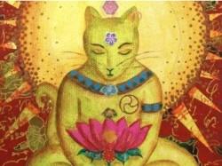 K800_budismo y gatos 2