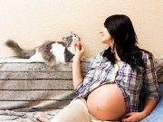K640_pregnancy-cat2